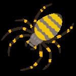 2016年5月1日 蜘蛛