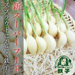 2017年12月12日 ミヤハラ農園のスプラウトにんにく鉄子を天ぷらで食らう