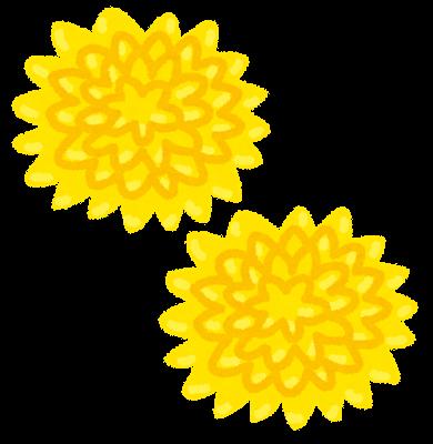2020年9月6日 菊の花を買ってきて体中の穴という穴に突っ込めばいいのか!