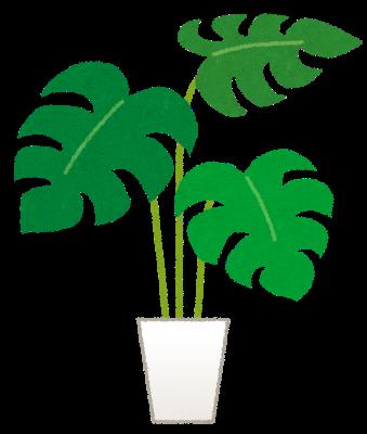 2020年9月11日 観葉植物なんか買わないで、お前が外に出ろ